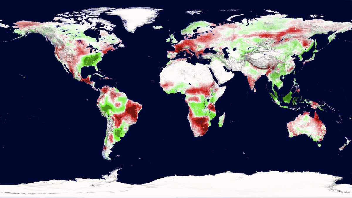 Global Plant Productivity